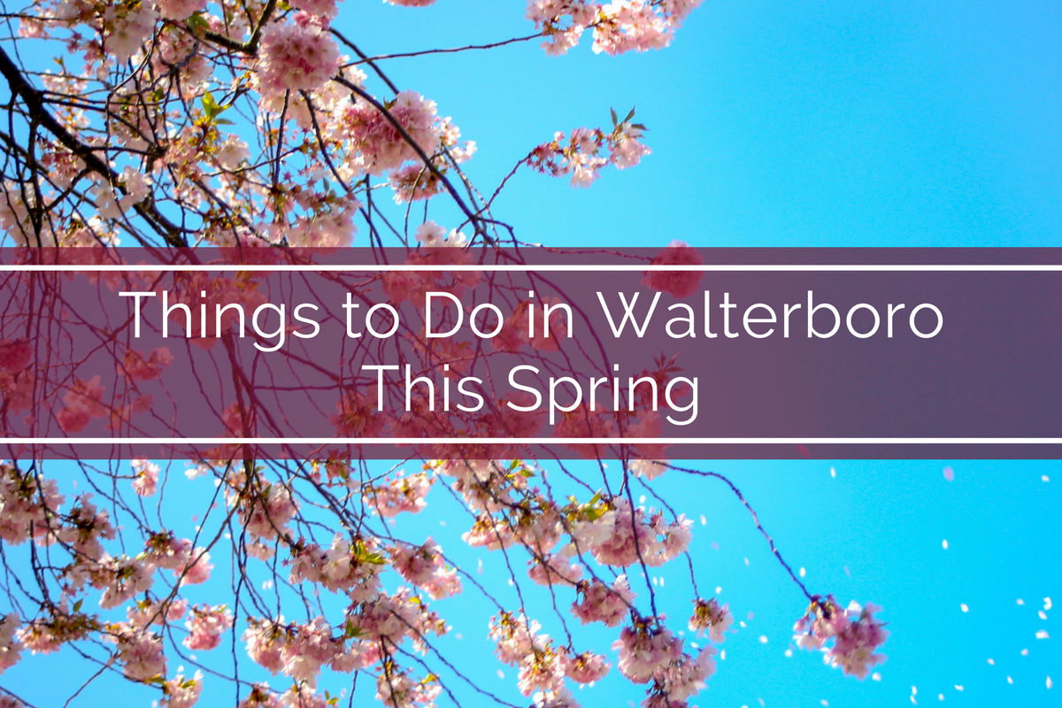 Things to Do in Walterboro this Spring